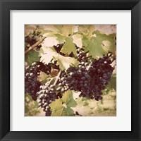 Framed Vintage Grape Vines II