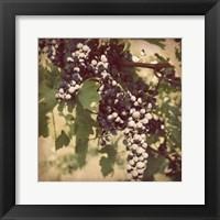 Framed Vintage Grape Vines IV