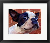 Framed Boston Puppy