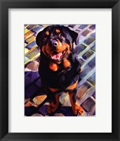 Framed Handsome Rottie
