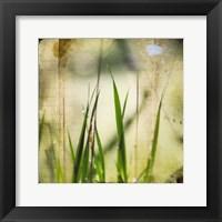 Framed Green II