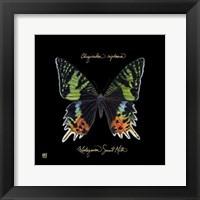 Framed Striking Butterfly II