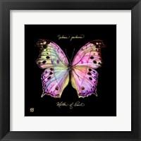 Framed Striking Butterfly III