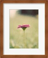 Framed Flower Portrait I
