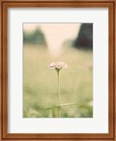Framed Flower Portrait II