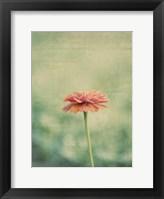 Framed Flower Portrait III