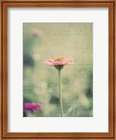 Framed Flower Portrait IV