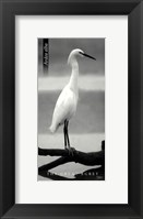 Framed Great Egret
