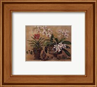 Framed Orchid Renaissance