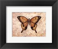 Butterfly VI Framed Print