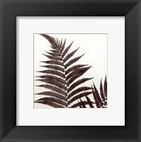 Framed Delicate Ferns