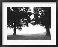 Framed Fog in the Park II