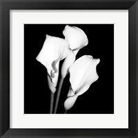 Framed Calla Portrait II