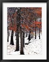 SnowFall II Framed Print