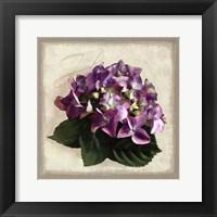 Framed Botanical Hydrenga