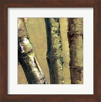 Framed Bamboo Columbia IV