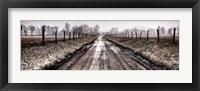 Framed Picket Path