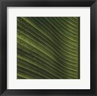 Framed Perfect Leaf I