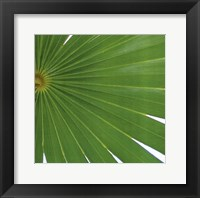 Framed Exposed Palm II