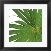 Framed Exposed Palm I