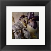Irises After the Rain Framed Print