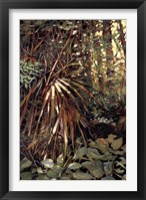Framed My Jungle I