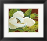 Framed Magnolia I