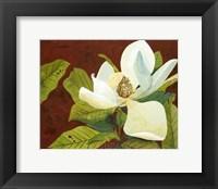 Framed Magnolia II