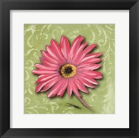 Blooming Daisy I Framed Print
