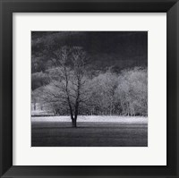 Framed Cades Tree II