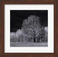 Framed Cades Tree I