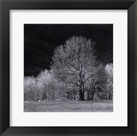 Framed Cades Tree I