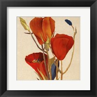 Red Grandiflorum II (close up) Framed Print