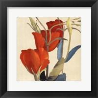 Red Grandiflorum Framed Print
