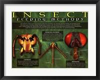 Framed Insect Feeding Methods