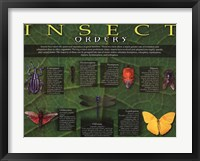 Framed Insect Orders