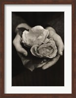 Framed Two Roses