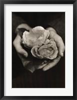 Framed Two Roses
