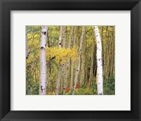 Framed Aspen Abstract Journal