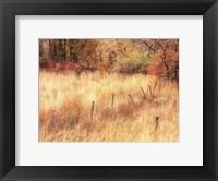 Framed Autumn Pasture