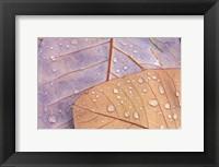Framed Waterdrops on Magnolia Journal