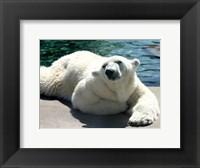Framed Polar Bear on the floor