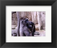 Framed Gorilla - Perhaps?