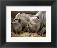 Framed Two Rhinos