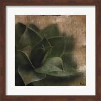 Framed Succulent II