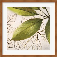 Framed Fresh Leaves I