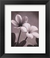 Plumeria II - mini Framed Print