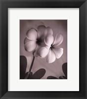 Framed Plumeria I - mini