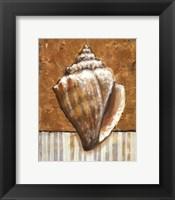 Vintage Shell II - mini Framed Print
