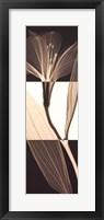 Framed Peruvian Lily I